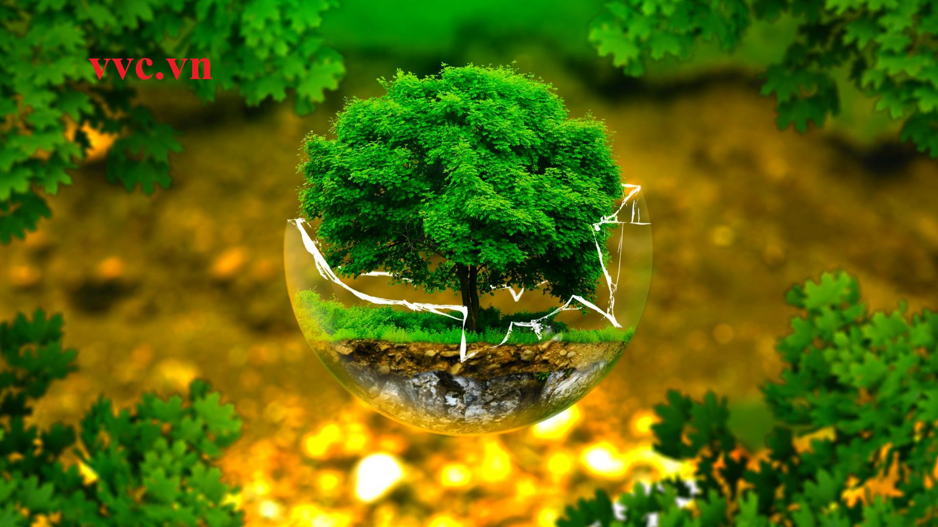 Môi trường và tầm quan trọng của việc bảo vệ môi trường sống